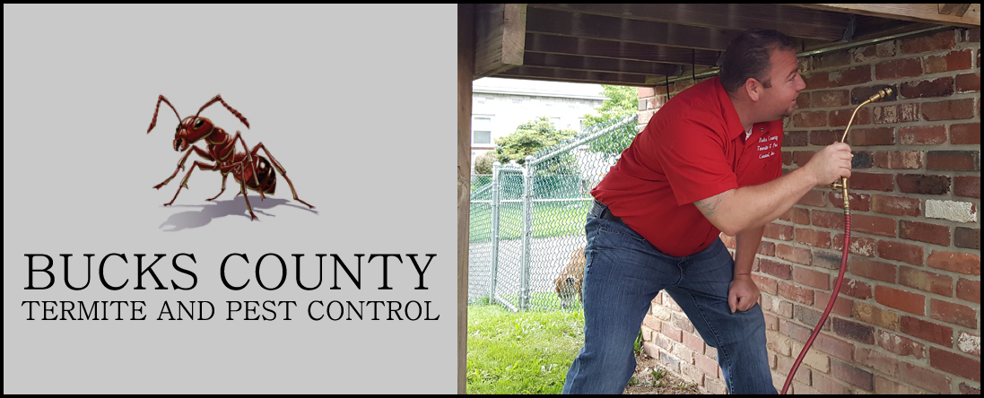 Bucks County Termite and Pest Control Performs Mosquito Extermination in Croydon, PA