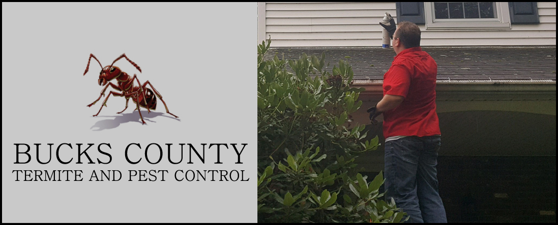 Bucks County Termite and Pest Control Offers Fleas and Ticks Removal in Croydon, PA
