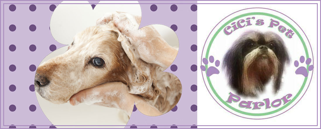 Cici's Pet Parlor is a Pet Groomer in Lakewood, CO