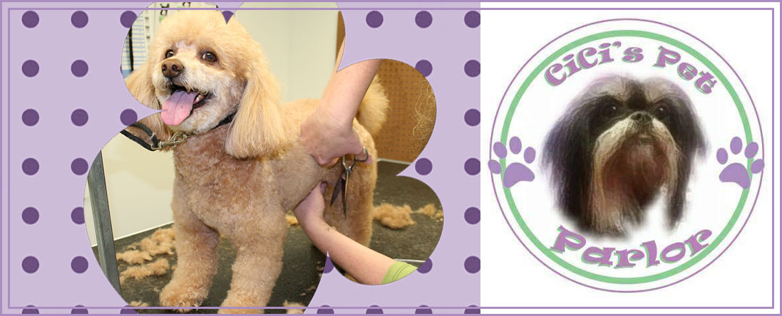 Cici's Pet Parlor Offers Dog Haircuts in Lakewood, CO