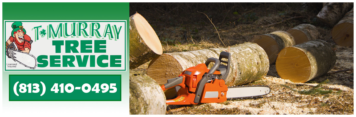 T Murray Tree Service  is a Tree Company in New Port Richey,FL