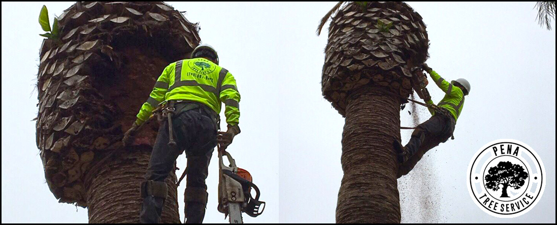Pena Tree Services is an Arborist in Oceanside, CA