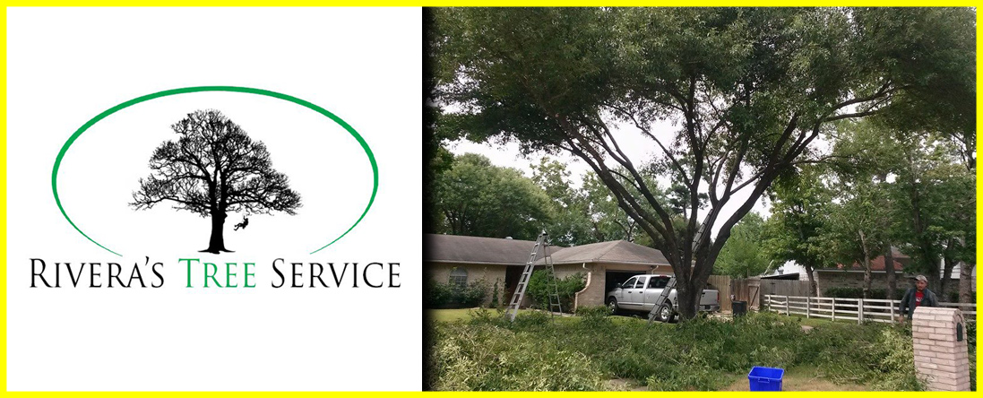 Rivera's Tree Service Offers Tree Trimming in Houston, TX