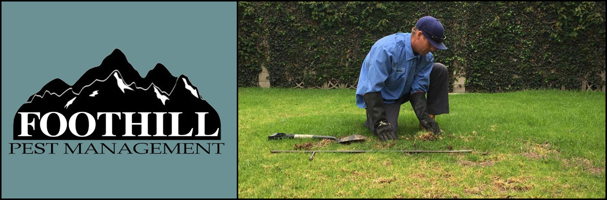 Foothill Pest Management  is a Pest Control Company in Carpinteria, CA
