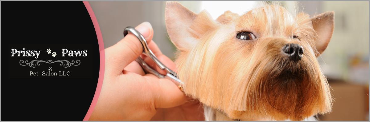 Prissy Paws Pet Salon, LLC is a Pet Spa in Branson, MO